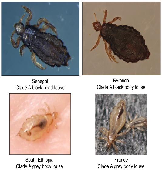 licespecies