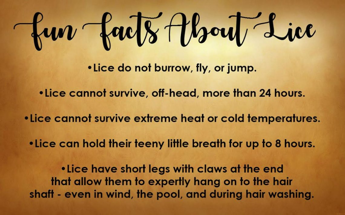List of basic facts about head lice