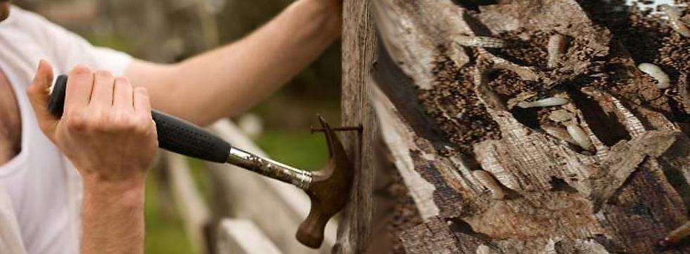 Regain your home, exterminate termites.