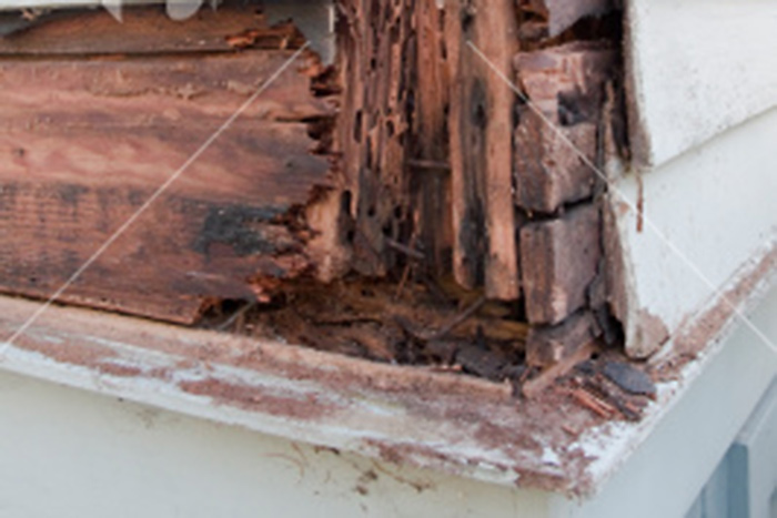 Rid your home of termites with our extermination services.