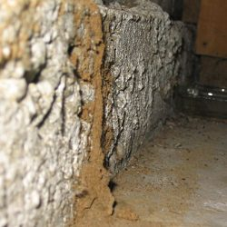 Termite tunnels can indicate termite damage around your home!