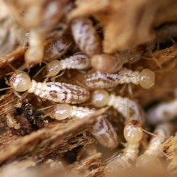 Don't let a termite infestation damage your home!