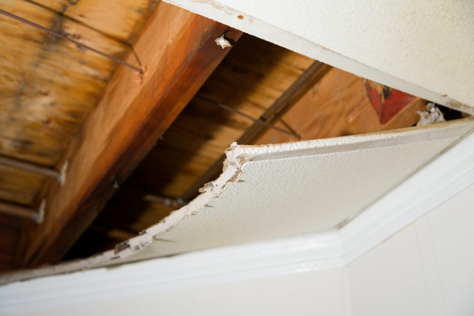 Rafters Damaged by Termites