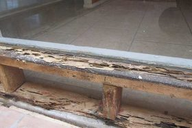 Stop termite damage with our extermination services!