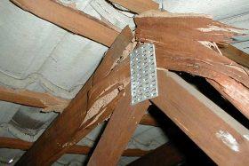 We control your termite problem.