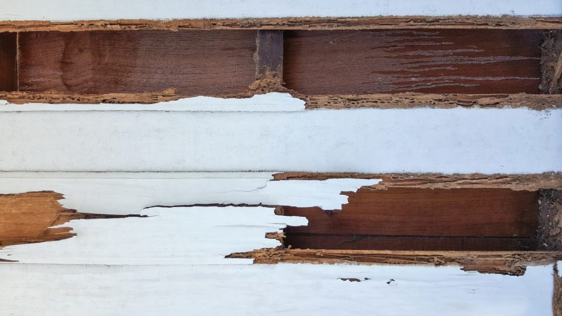 Termite Damage on Wood