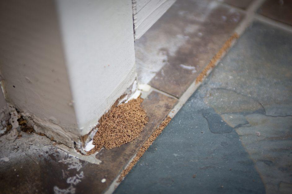 Termite Droppings Closeup