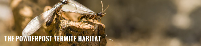 habitat44