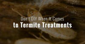 Don't DIY Treat Termites