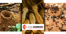 Termite Control Triptych Banner