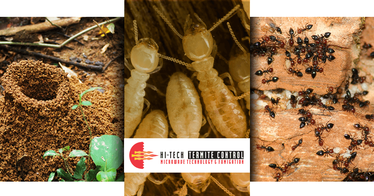 Termite Control Triptych Banner