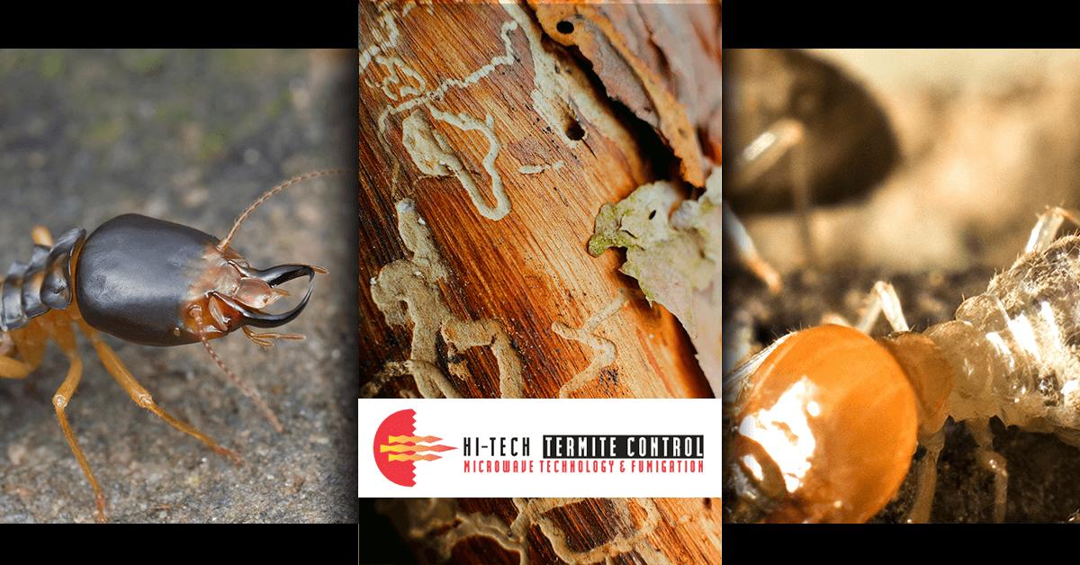 Termite Extermination Triptych Banner