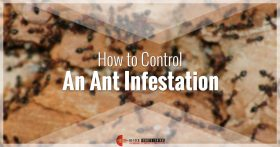 Controlling Ant Infestation Banner