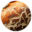 Termite Tunneling Icon