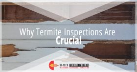 Why Termite Inspections Are Crucial Banner