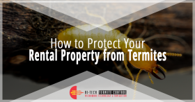 How to Protect Your Rental Property From Termites