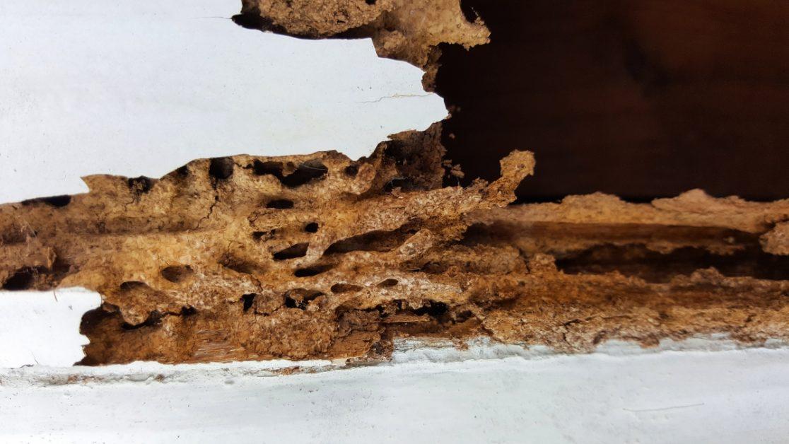 Termite Damaged Wall