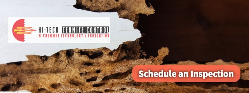 Schedule a Termite Inspection CTA With Damaged Wood