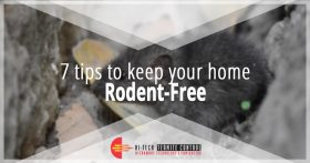 7 Tips to Keep Your Home Rodent Free Banner