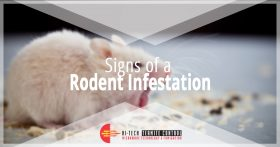 Signs of a Rodent Infestation Banner