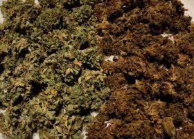 Ecample of ecarboxylation of cannabis from our home grow service in Massachusetts