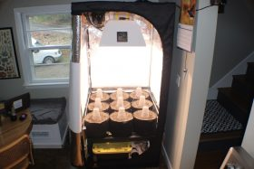 Image of a grow tent from Home Grow Community, our home grow service in Massachusetts