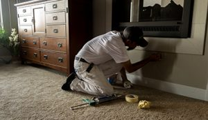 Find the highest quality professional painters in Fort Collins today.