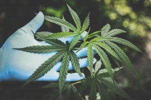 cannabis waste pickup