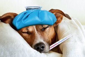 dog-flu-2016