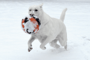 dog-playing-in-snow-300x200