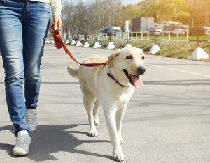 walking-your-dog-300x234
