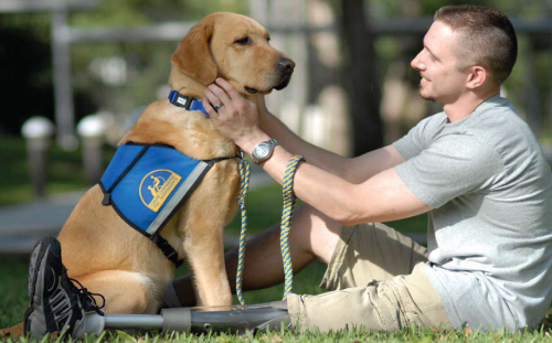 psychiatric service dog helping man