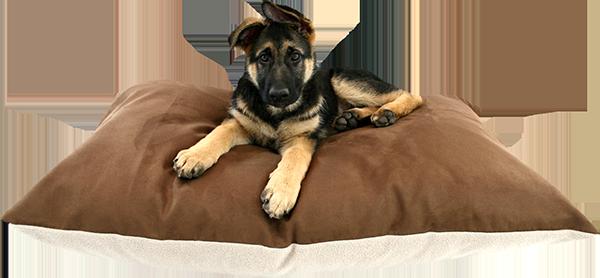 shop our xxl dog beds