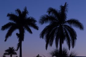 Palm trees against a Florida night sky.