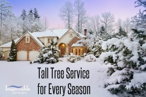 Tall tree service in winter.
