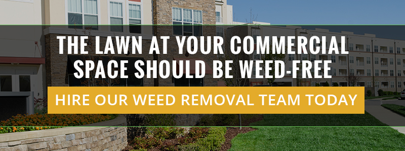 The Lawn At Your Commercial Space Should Be Weed-Free