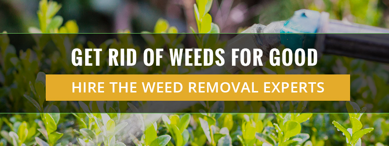 Get Rid Of Weeds For Good