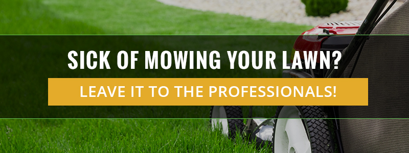 Sick of Mowing Your Lawn