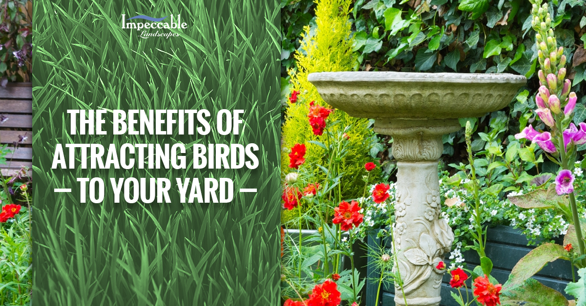 Lawn Care Spokane: Should You Be Attracting Birds To Your Yard?