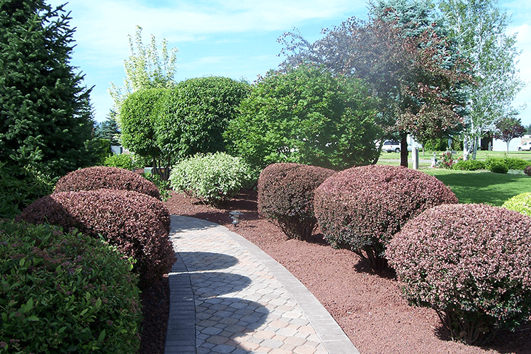 Pruning & Trimming