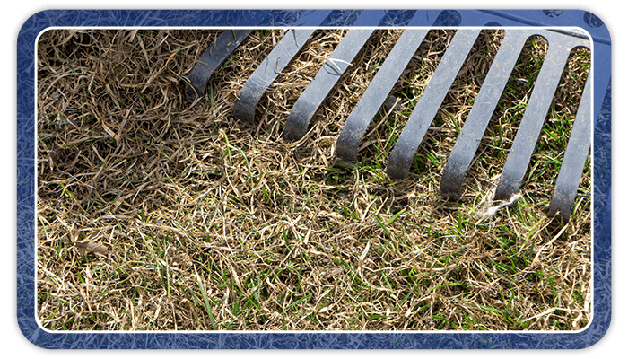 Image of a rake getting rid of dead grass
