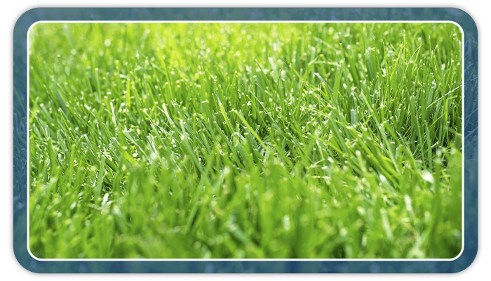 Image of a healthy green grass