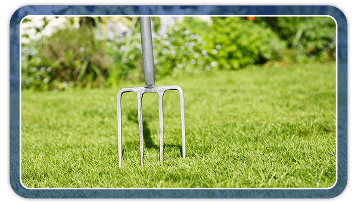 Image of a digging fork being used for lawn aeration