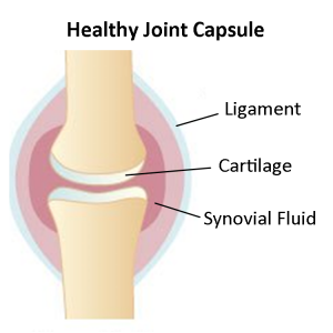 healthy joint capsule graphic