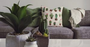 Cactus plants and a designer couch in a comfortable home.