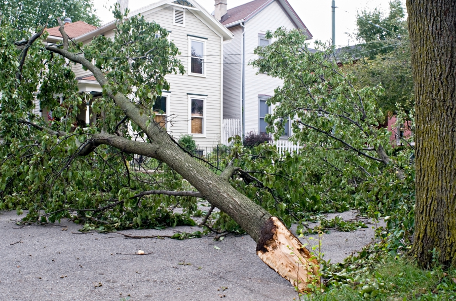 Chicagoland Storm Damage Services - Learn More | J&S Tree Service, Inc