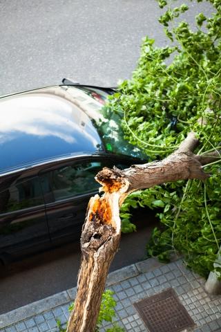 treebreak1