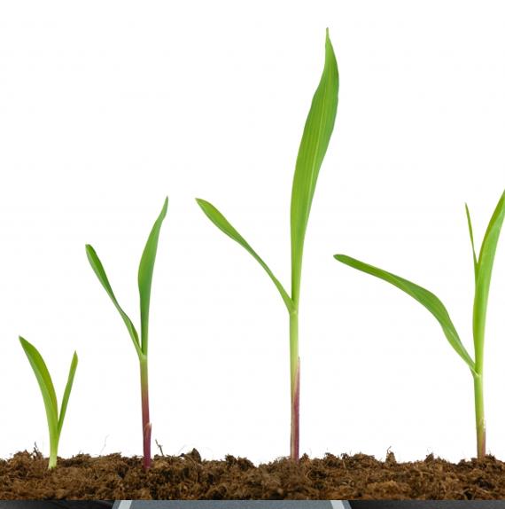 plant-new-1-23