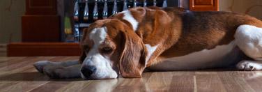 The soft comfort of hardwood floors