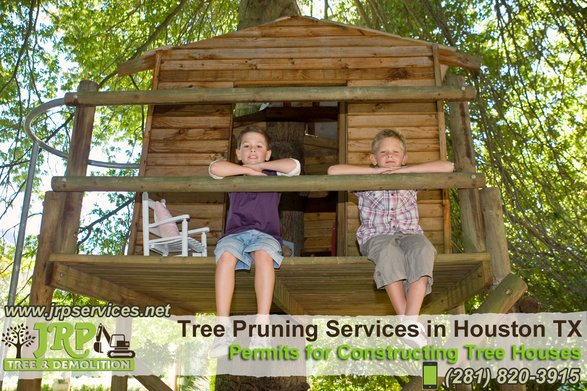 01-Tree-Pruning-Services-in-Houston-TX